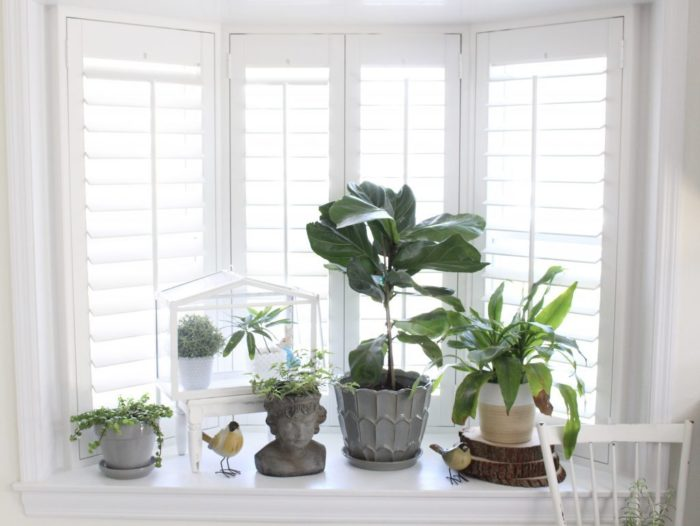 Plantation shutters by some plants