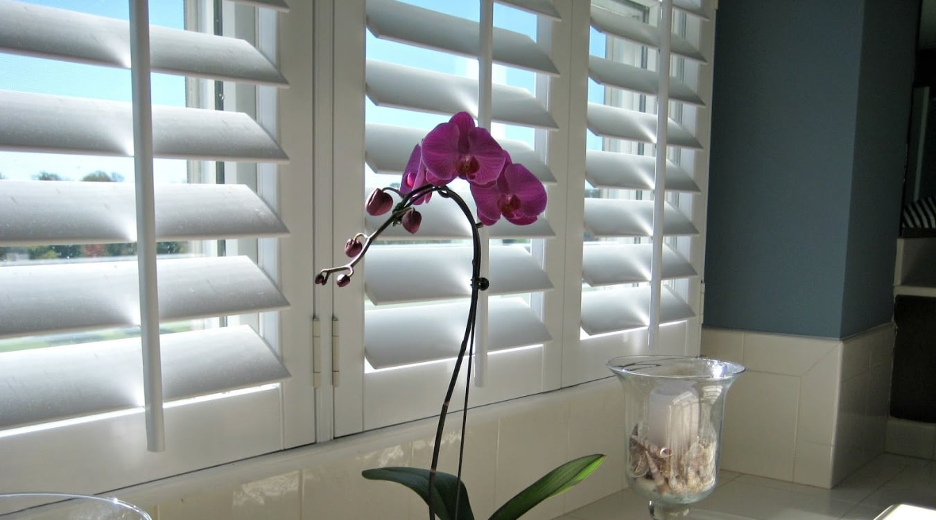 Orchids in front of plantation shutters